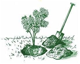 Starostlivosť o kyslomilné rastliny